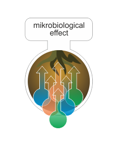 microbiological effect.png